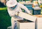 Honig-Gewinnung