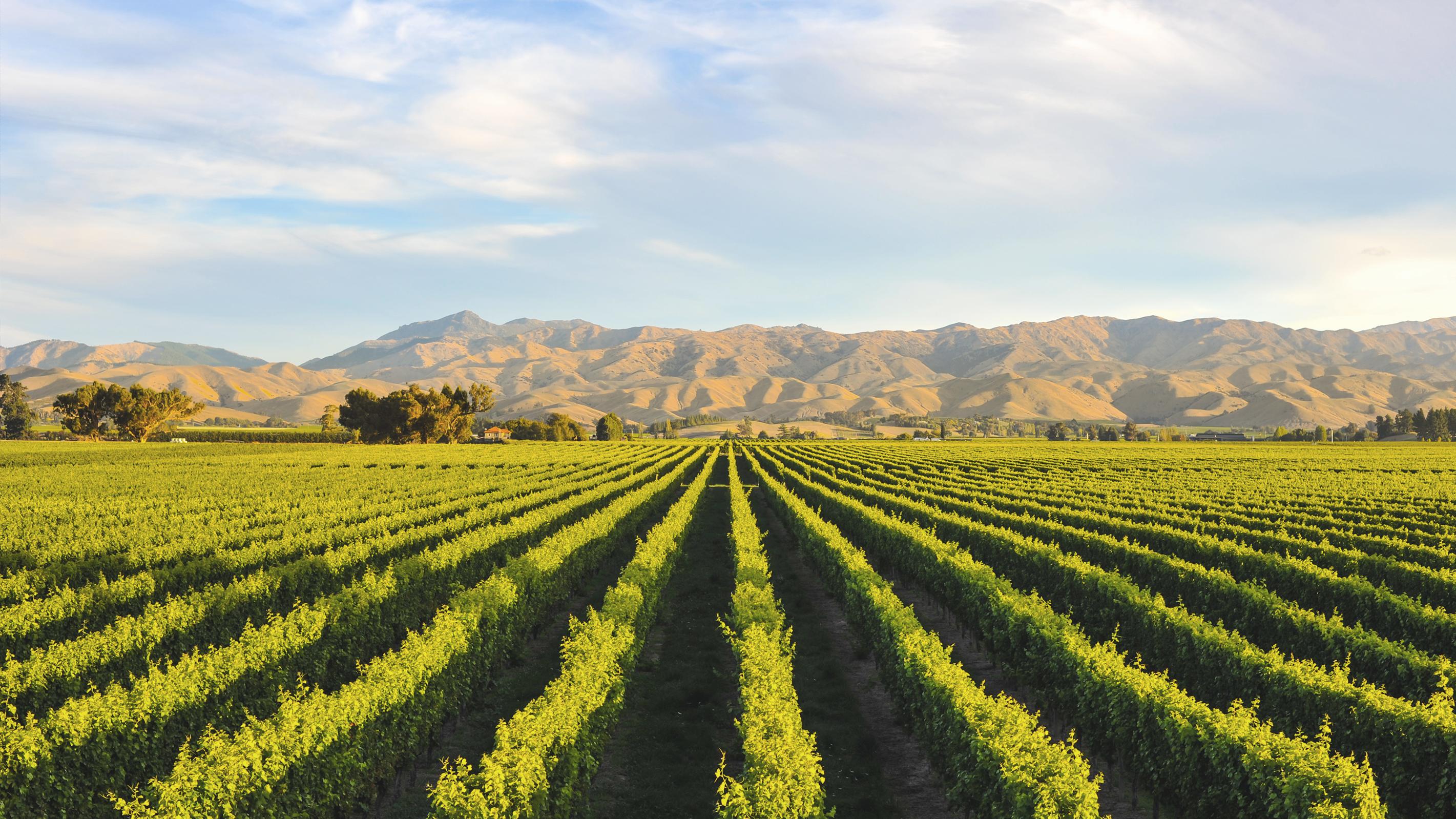 Weinberge für Wein aus Neuseeland