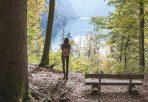 Shinrin Yoku – Waldbaden als Geheimwaffe für Körper und Seele